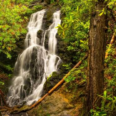 Top 5 Easy Hikes in the Smoky Mountains National Park